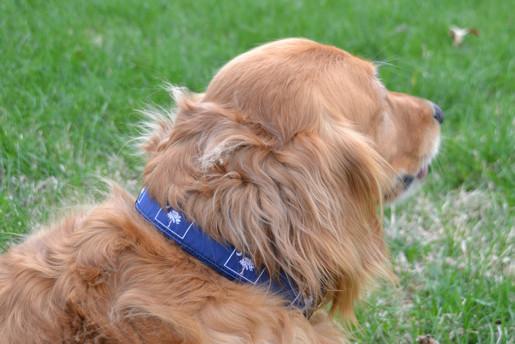 South Carolina State Flag Dog Collars